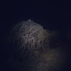 with creepy trees like this, I don't need additional stuff to scare me